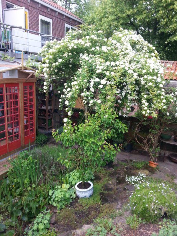 Rob Rott Garden